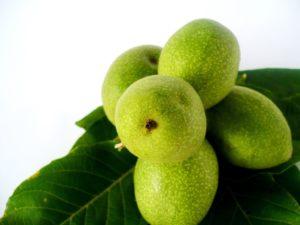 Незрелый грецкий орех на листочке