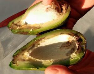 Очищенный авокадо