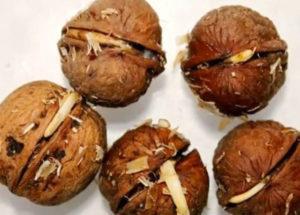 5 орешков с ростками