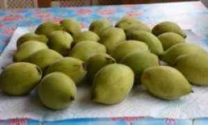 Лечебные свойства настойки маньчжурского ореха