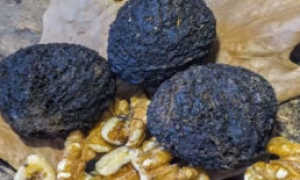 Как принимать черный орех от глистов