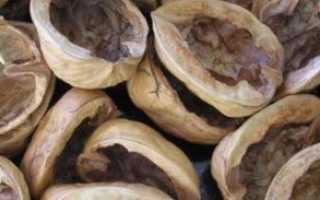 Настойка из скорлупы грецких орехов