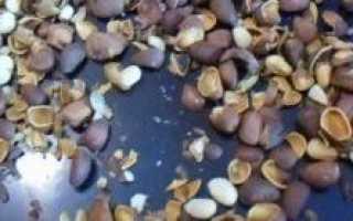 Как можно использовать скорлупу кедровых орехов