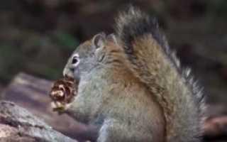 Для чего полезен кедровый орех