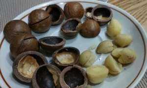 Использование скорлупы макадамского ореха