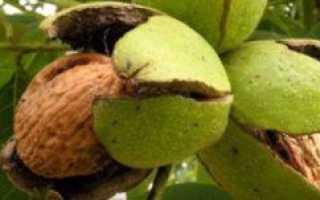 Содержит ли грецкий орех йод