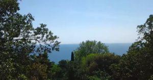 Вид на фисташку и море
