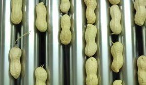арахис на аппарате