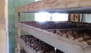 грецкие орехи на поддонах