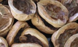 скорлупки ореха