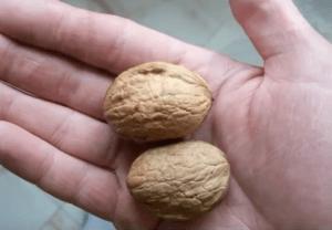 два ореха на ладони